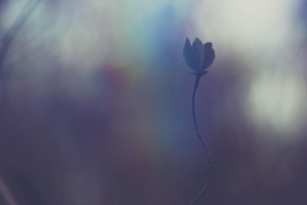 Loris-nature-bd03-980x653