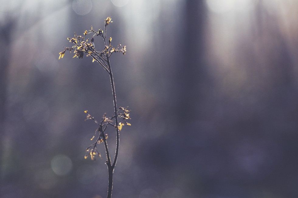 Loris-nature-bd16-980x653